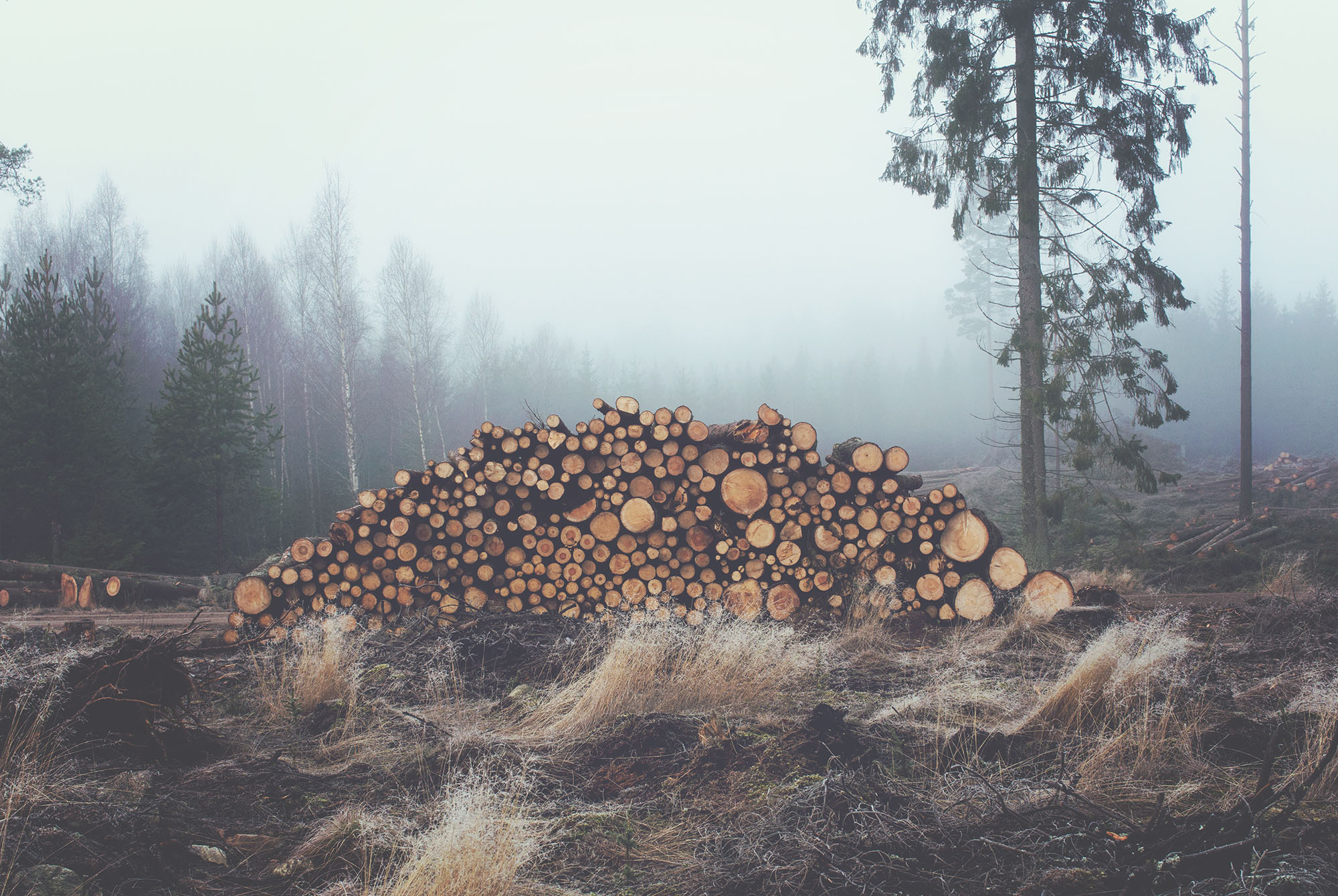 forestier f2mc